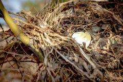 Гнездо ` s птицы в дереве Стоковая Фотография