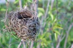 Гнездо ` s птицы на ветви дерева против травы Стоковые Фото