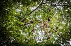 Гнездо ` s птицы на дереве Стоковое Фото
