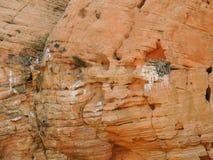 Гнездо ` s птицы сделанное в дефекте в песчанике и заполненное с хворостинами и ветвями вокруг зоны консервации красных скал наци Стоковые Фотографии RF