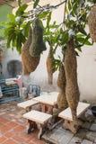 Гнезда жаворонка и яичка птицы, гнездо птицы ткача сделанное из сена Стоковые Фотографии RF