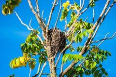 Гнезда на ветвях стоковые изображения rf