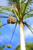 Гнезда 2 птицы Стоковые Изображения RF