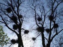 Гнезда птиц Стоковое Фото