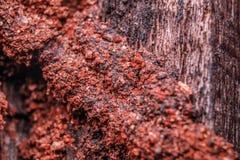 Гнезда термита Стоковое Изображение