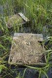 Гнезда тройки Forster Стоковые Фото