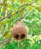 Гнездитесь на ветви дерева, предпосылке природы леса, смертной казни через повешение гнезда ` s птицы на ветвях Стоковое Изображение