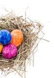 Гнездй с пасхальными яйцами на белизне Стоковое Изображение