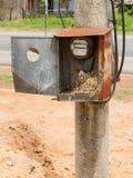 Гнездй воробья в шкафе с электрическим метром стоковая фотография rf