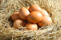 гнездй коричневых яичек Стоковое Изображение