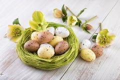 Гнездй пасхи с пасхальными яйцами Стоковые Изображения RF