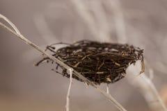 Гнездй птицы на вале Стоковые Изображения RF