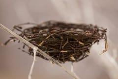 Гнездй птицы на вале Стоковая Фотография RF