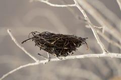 Гнездй птицы на вале Стоковое Изображение RF