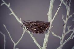 Гнездй птицы на вале Стоковые Фотографии RF