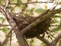 гнездй Стоковое фото RF