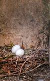 гнездй Стоковая Фотография RF