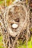 гнездй s птицы Стоковые Изображения RF
