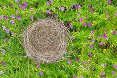 гнездй s птицы Стоковые Изображения