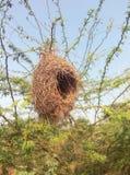 гнездй s птицы Стоковые Фото