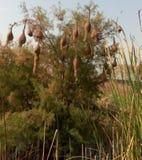 гнездй s птицы Стоковые Фотографии RF