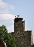 Гнездо аиста на остатках виска Стоковые Фотографии RF