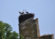 Гнездо аиста на остатках temple_2 Стоковая Фотография