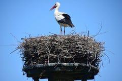 Гнездо аиста на поляке Стоковая Фотография RF