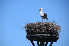 Гнездо аиста с одним аистом Стоковое Изображение RF