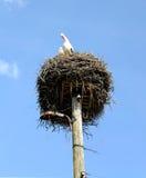 Гнездо аиста Стоковые Изображения