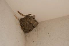 Гнездо ласточек Стоковые Фотографии RF