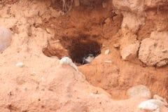 Гнездо ласточек Стоковое Фото