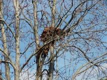 Гнездо белки Стоковые Фотографии RF