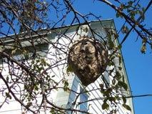 Гнездо бумажной оси Стоковые Изображения