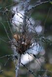 Гнездо ветра Стоковое Фото