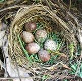 Гнездо воробья дома Стоковое фото RF