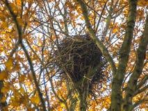 Гнездо вороны в верхней части дерева в осени Стоковая Фотография RF