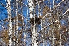 Гнездо ворон Стоковое фото RF