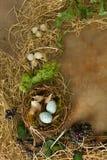 Гнездо в границе весеннего времени Стоковая Фотография RF