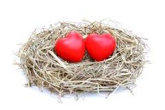 Гнездо влюбленности Стоковая Фотография RF