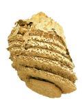 Гнездо гигантского шершня Стоковое Изображение RF