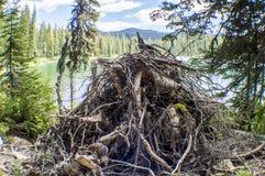 Гнездо грызуна Стоковое Изображение