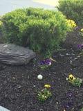 Гнездо гусыни в Flowerbed Стоковая Фотография RF