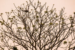 Гнездо дерева Стоковое Фото