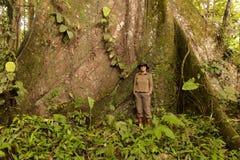 Гнездо женщины биолога к дереву капка Стоковые Изображения