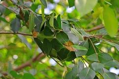 Гнездо красных муравьев Стоковое фото RF
