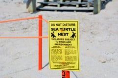 Гнездо морской черепахи Стоковая Фотография RF