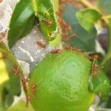 Гнездо муравья стоковые изображения