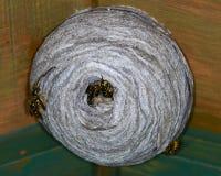 Гнездо оси стоковое фото