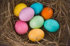 Гнездо пасхи с покрашенными яичками Стоковое Фото